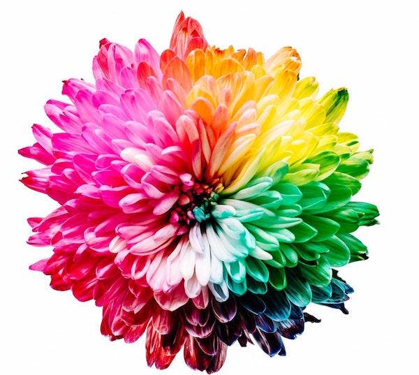 colori dei chakra