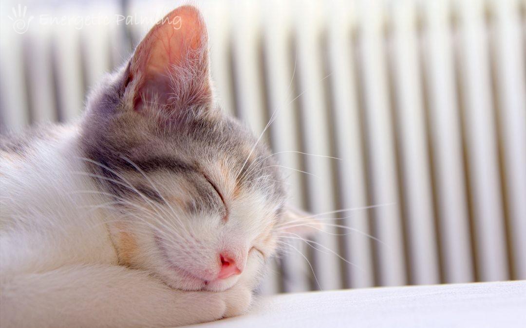 energia dei gatti